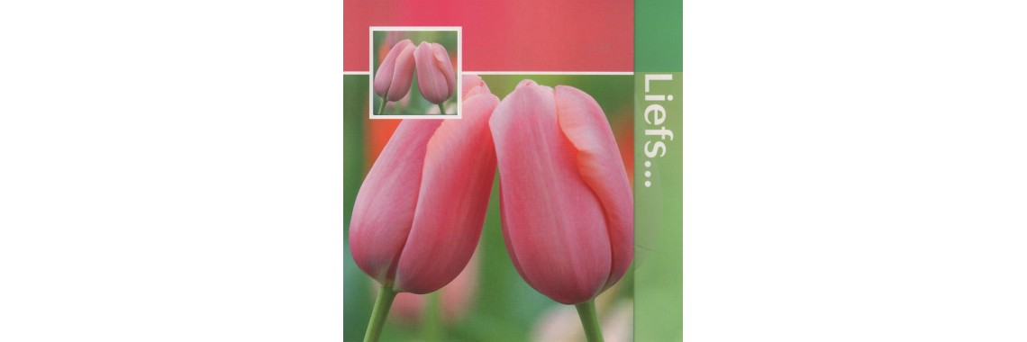 kaartje Liefs